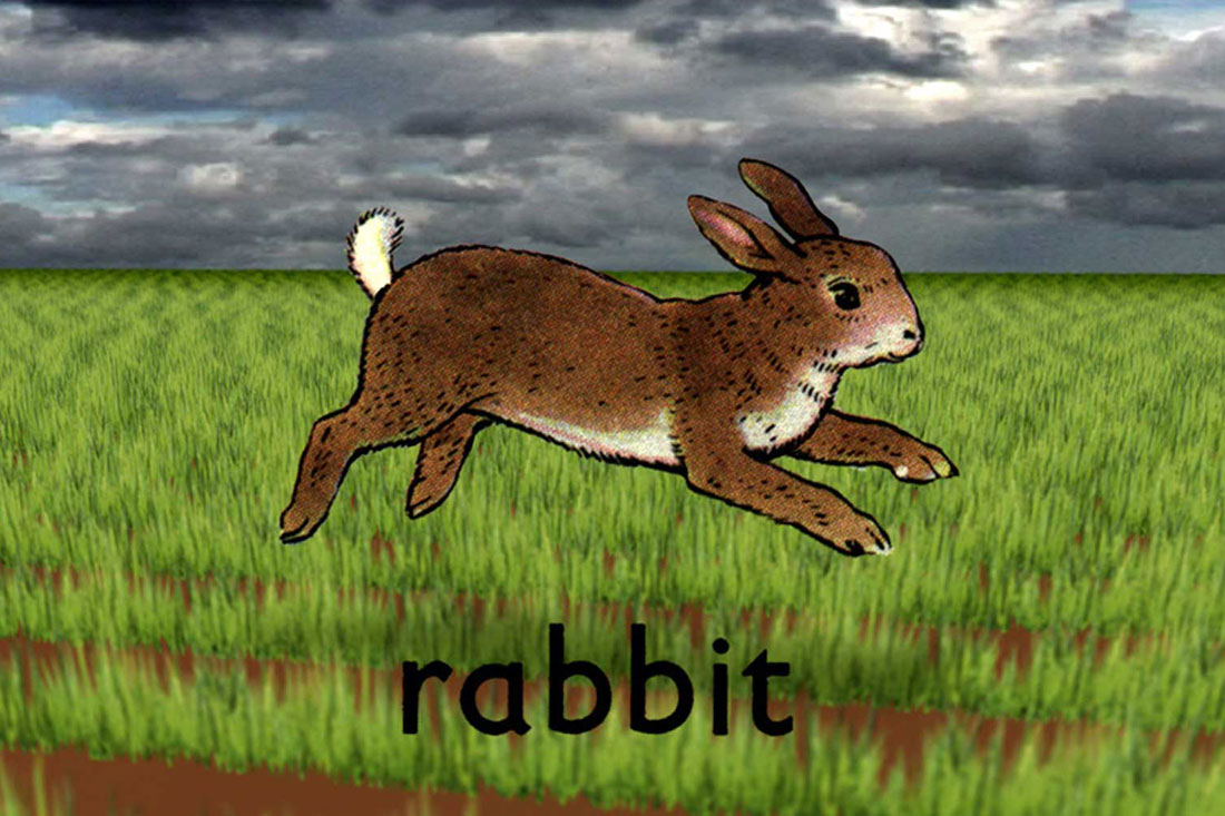 rabbit running through field